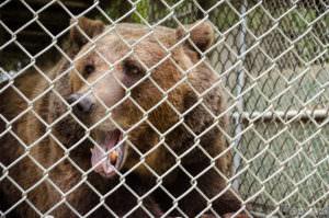 Bear at Wildlife Waystation