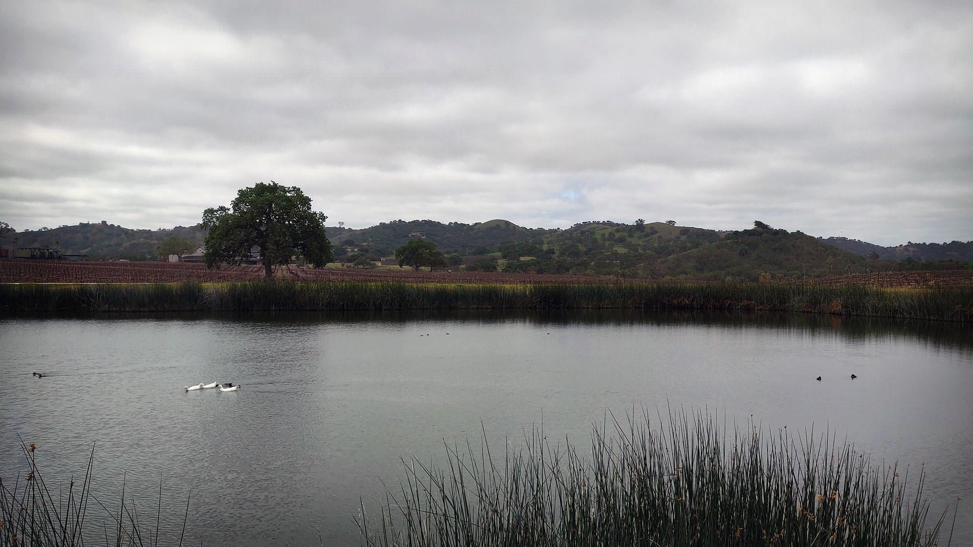 CASS Vineyard Pond